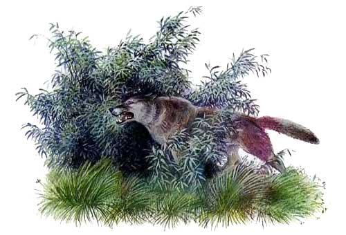 Рассказы о животных Ушинского читать онлайн