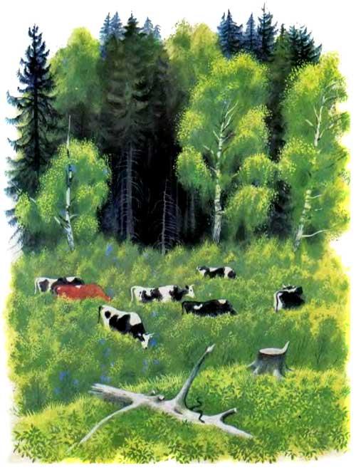 К.Ушинский - рассказы о животных с картинками