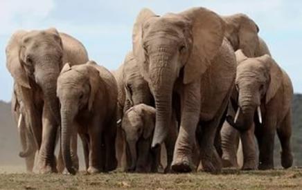 20 слонов