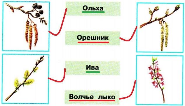 gdz-po-okrugauchemu-miru-str-41-3-1