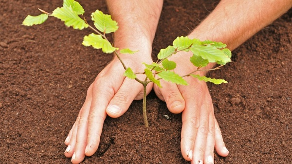 Охрана природного сообщества леса