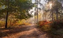 Долгожданная осень