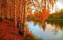 Золотоволосая осень