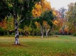 Преждевременная осень