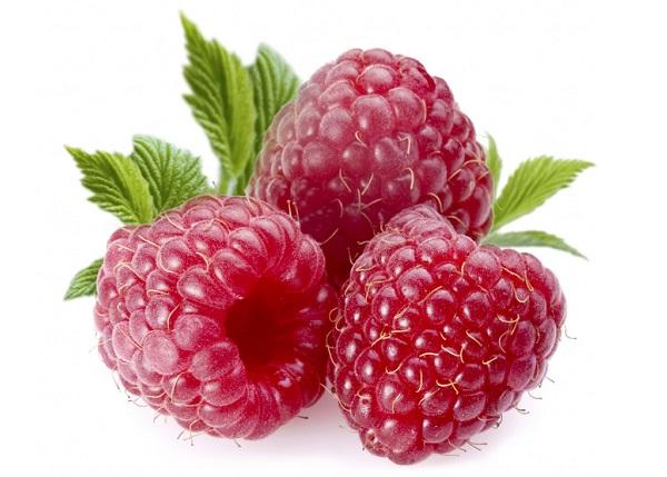 Любимая ягода медведя