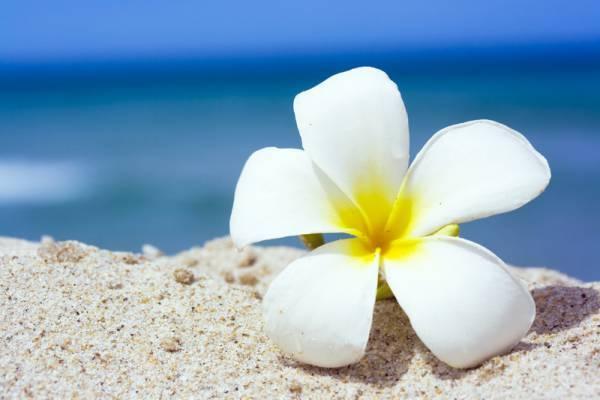 Беленький цветочек
