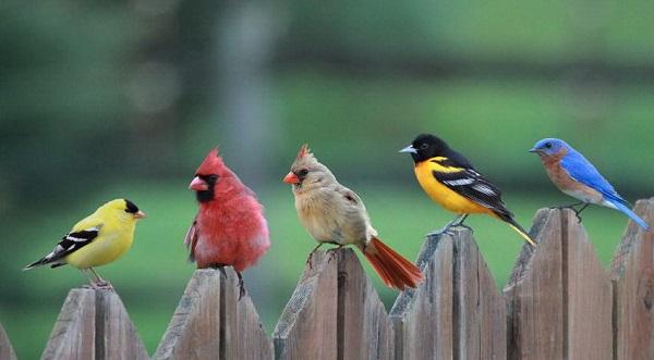 Пять птичек