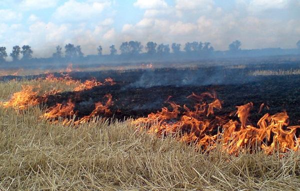 Подожгли сухую траву на поле