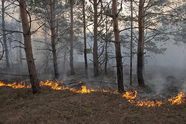 Подожгли траву в лесу