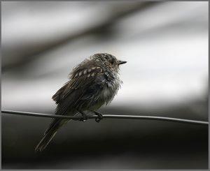 Птичка Божия не знает