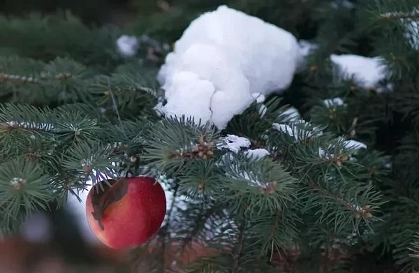 Яблоко как украшение