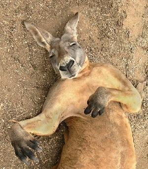 Решить задачу кенгуру 3 класс инструкция по решению задач по физике