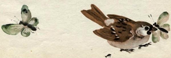 Бабочки и воробей