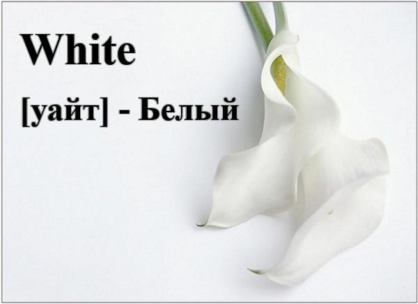 Белый по-английски
