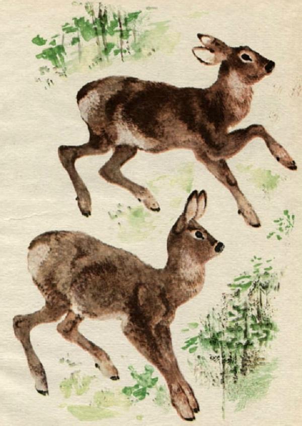 Дикие козы