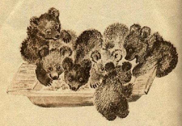 Медвежата у корытца с едой