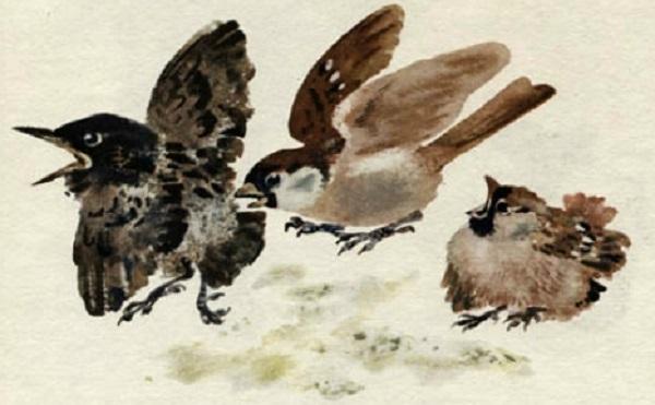 Птички на дворе