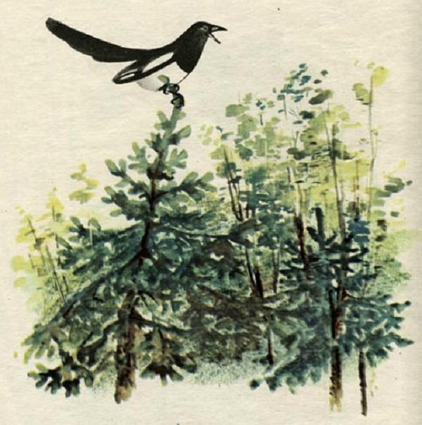 Сорока на дереве