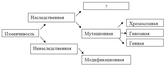 Схема классификации видов изменчивости