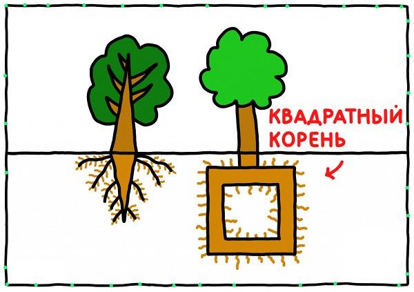 Квадратный корень