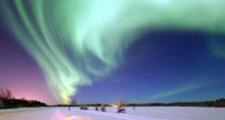 Растения зоны арктических пустынь фото