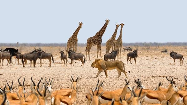Животные в Калахари
