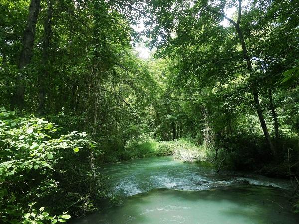 Субтропические леса
