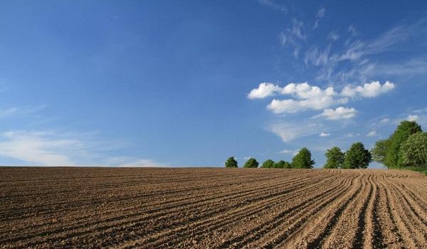 Распаханные и засеянные поля