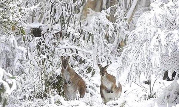 Снег в Австралии