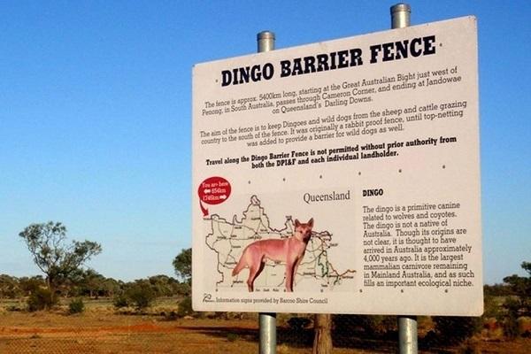 Забор длиной почти в 6 тыс. км. в Австралии