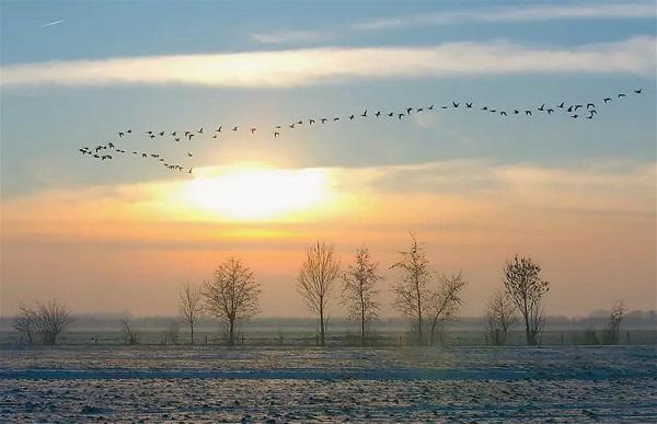 Птицы полетели в теплые страны