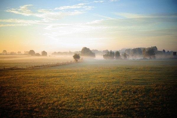 В поле туман