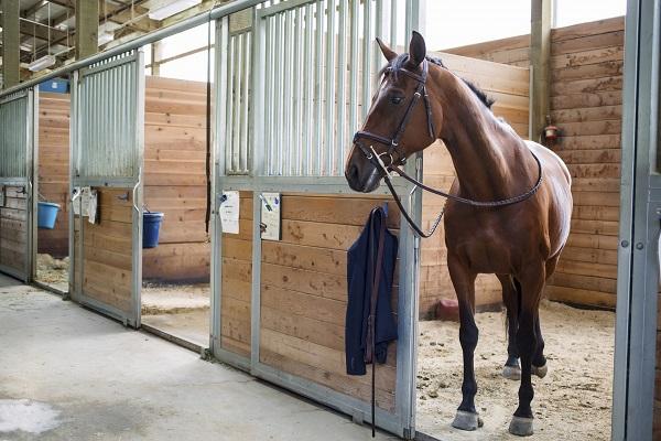 Конюшня для лошади