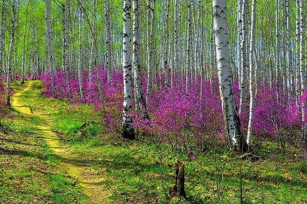 Лес весной