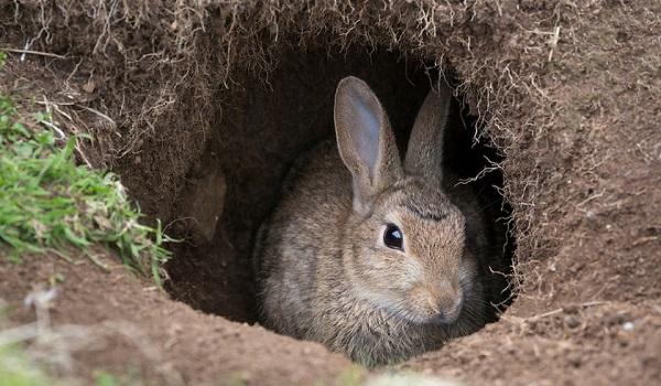 Нора зайца