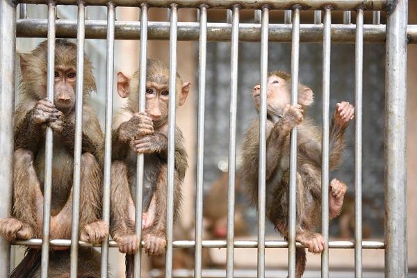 Обезьяны в обезьянниках