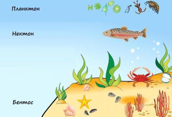 Организмы, живущие в океане
