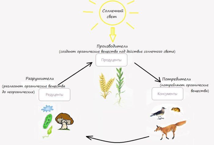 Роль организмов в биоценозе